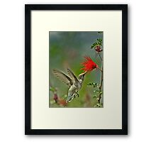 Poetry in motion Framed Print