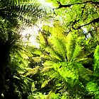 FERNS&lt; FERNS&lt; FERNS... by Jarrod Lees
