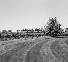 Domaine Chandon, Yarra Valley by Mark Hellewell