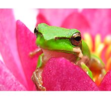 frog on lilly2 Photographic Print
