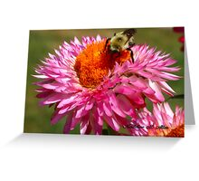 STRAWFLOWER DINER Greeting Card