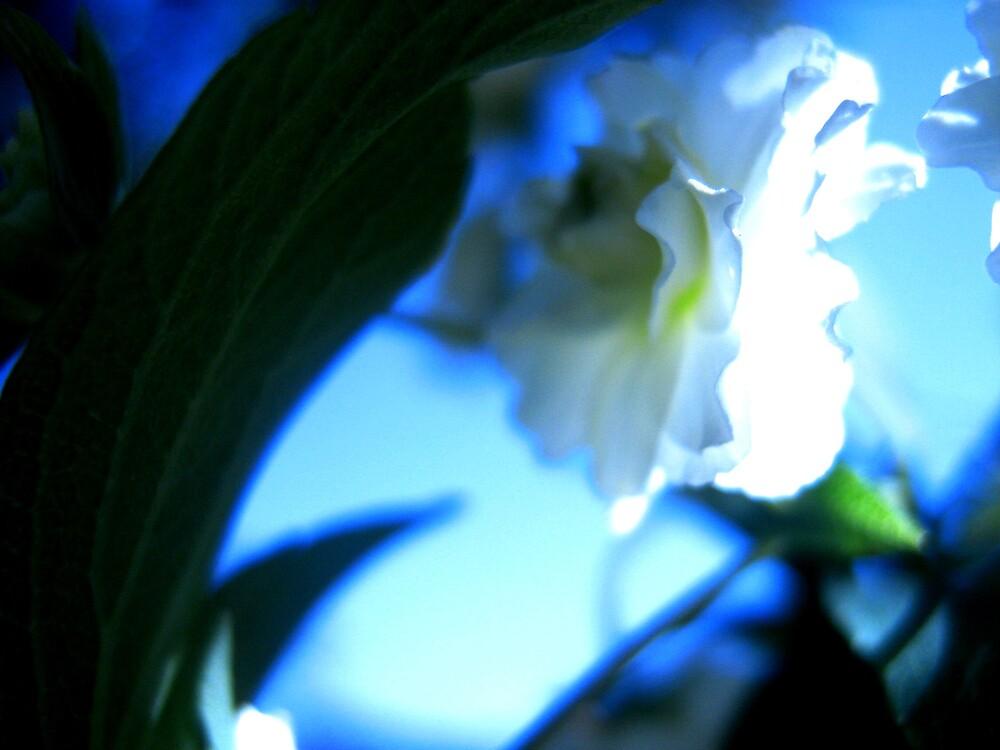 Blue Swoon by SherryAnn