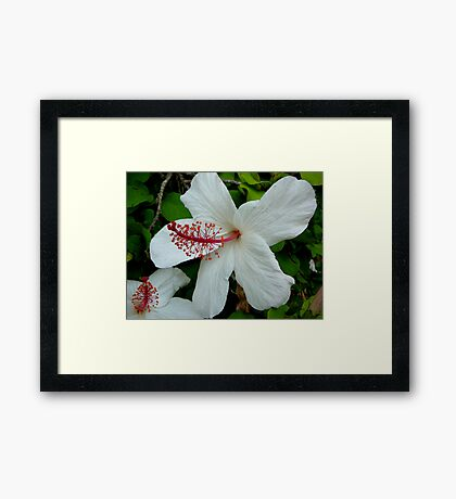 HIBISCUS IN VOLUMES Framed Print