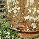 Daisies And Cracked Pot by Fara