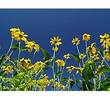 danish front garden Photographic Print