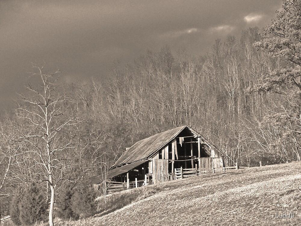 on a hillside by budrfli