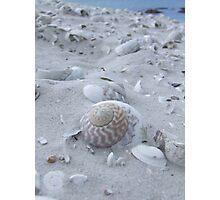 Shell Treasure Photographic Print