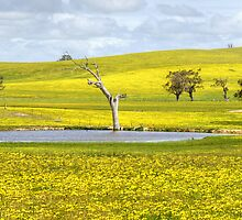 Yellow by Andy73
