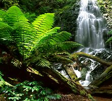 King Fern Falls by ChrisRoss