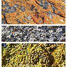 I Lichen This One by Craig Watson
