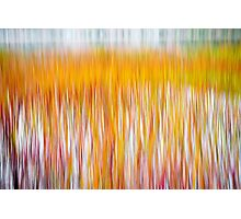Fire Reeds Photographic Print