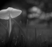 A Mushroom on the Cricket Pitch (please read Roy's touching comment)  by myraj