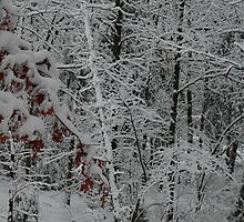 Winter Wonderland by mcrowleyphoto