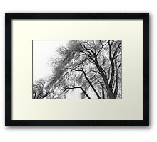 Freezing fog. Framed Print