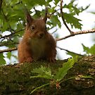 Cute Squirel by Rich Gale