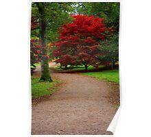 Maple Tree, Westonbirt Arboretum Poster