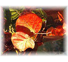 Sea Grape Leaves Photographic Print