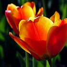 The Color Of Spring by Curtiss Simpson