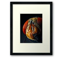 Face Value Framed Print