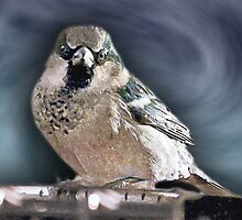 And Your Bird Can Sing by Scott Ruhs