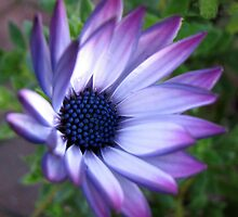 Dream Flower - Beautiful Blue Bokeh by BlueMoonRose