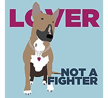 Roxy the Bull Terrier Photographic Print