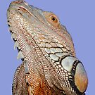 THINK LIZARDS: &quot;Help keep wild animals WILD- Adopt or Rescue domestic&quot; by Patricia Anne McCarty-Tamayo