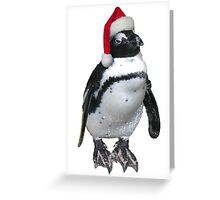Christmas penguin Greeting Card