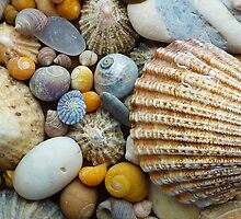Sea Shells a plenty by Tony  Bazidlo