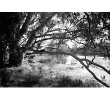 The lake at Dunkeld Community Park in Dunkeld, Victoria, in monochrome Photographic Print