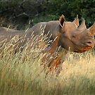 Black Rhino by Sharon Bishop