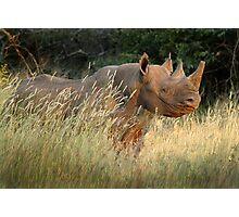 Black Rhino Photographic Print