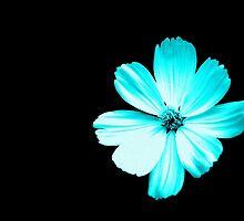 Petal Blu by Alex Blaha