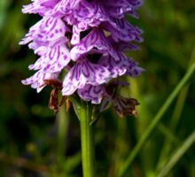 Spotted Orchid, Kilclooney, Donegal Sticker