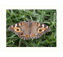 Tiger Butterfly Art Print