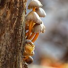 Fungi on an Old Stump #4 by ChuckBuckner