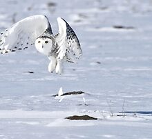 Explosive take off by Heather King