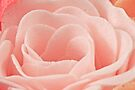 Bath Time Rose Soap Macro by Sandra Foster