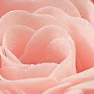 Bath Time Rose Soap Macro by Sandra Foster