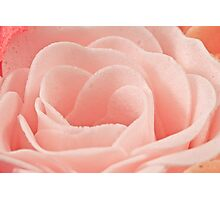 Bath Time Rose Soap Macro Photographic Print