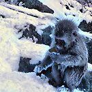 snow monkey checking facebook by Istvan Hernadi