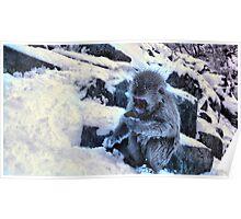 snow monkey checking facebook Poster
