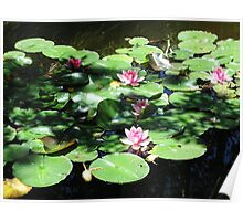 Water Lilies, Light and Shadow Poster