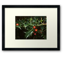Holly Berry Framed Print