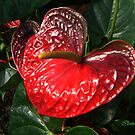 Beauty In Red by Ilunia Felczer