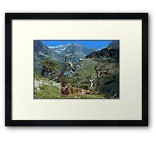NA678-Habitat Framed Print
