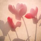 Cyclamen Shadows by Lucy Hollis