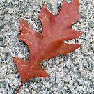 A Fallen Leaf by MidnightMelody