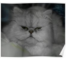 Shaded Silver persian Poster