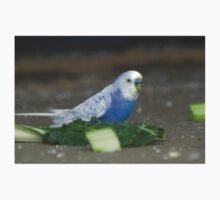 white wing blue budgie Kids Clothes